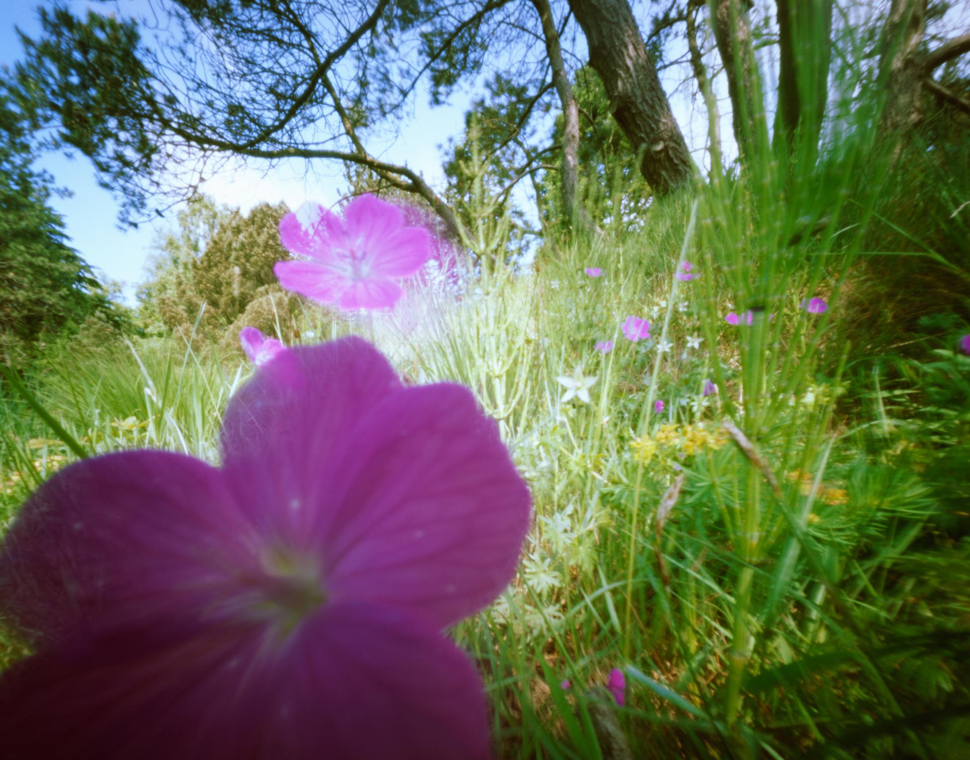 Floral Focus 1