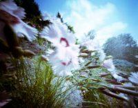 Floral Focus 4
