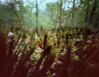 Myth of Nature 3