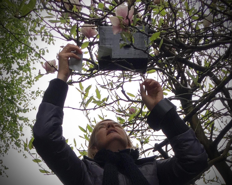 Pinhole camera in magnolia tree
